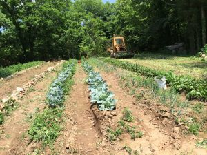 The Coley Springs Baptist Church Community garden really thrived in 2015!
