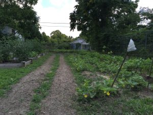 Summer is in full bloom at the St. Marks Church Community Garden in Lenoir County