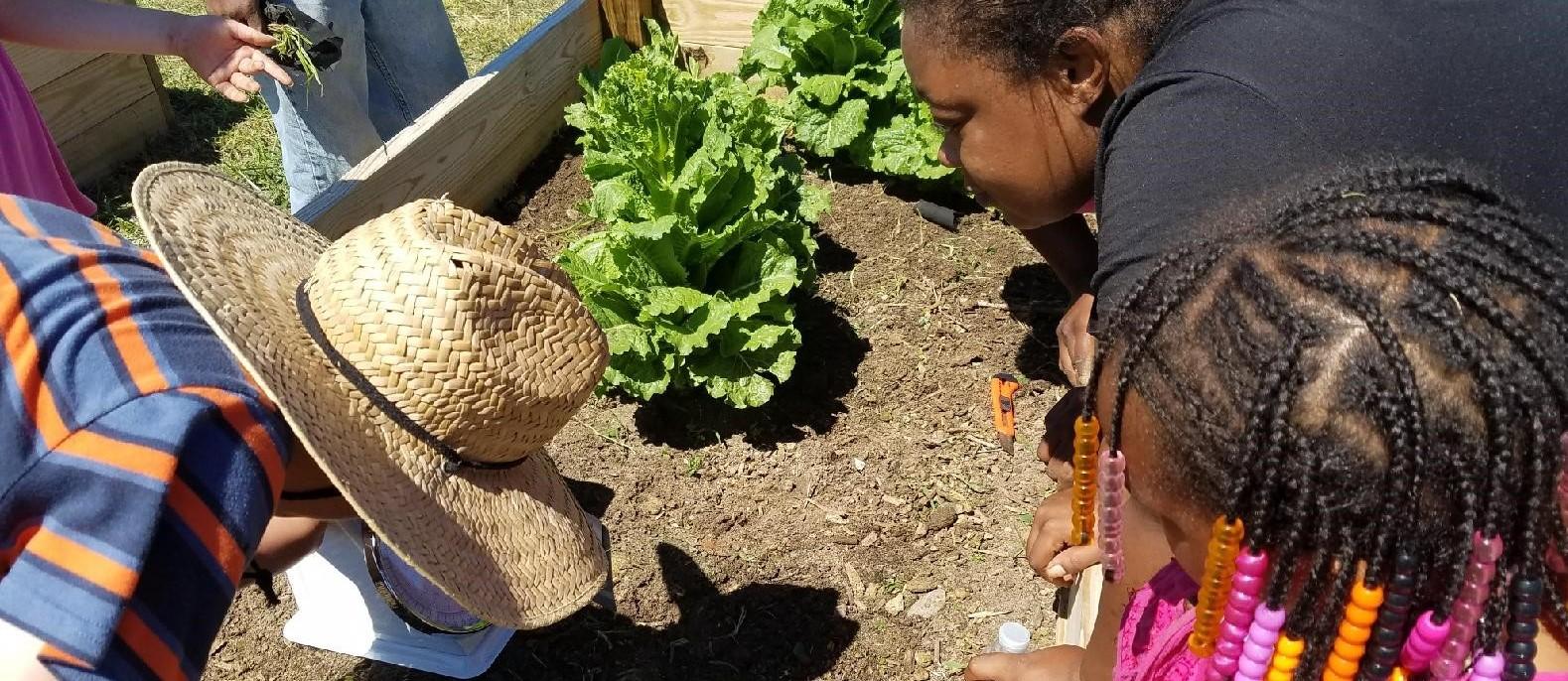 Community Gardens Group crop
